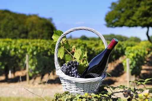 Wines from the Rhone region are warm and big-hearted wines. Photo: Getty Images.