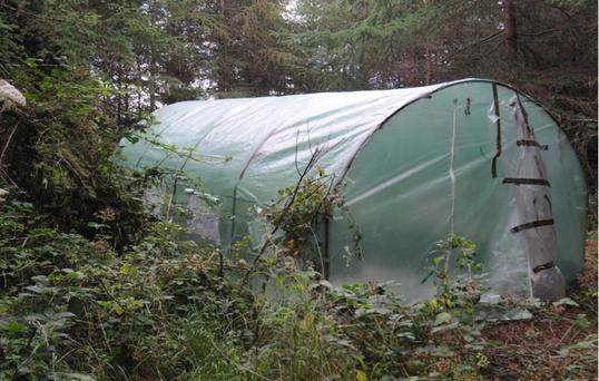 The drugs were found in a modified tent in woodland