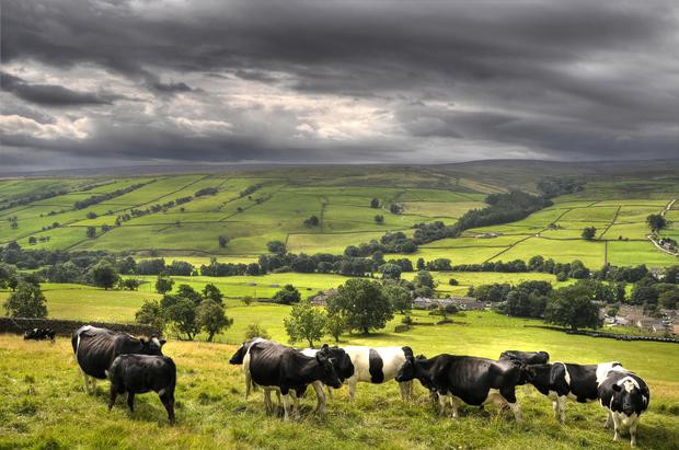 Green Yorkshire Dales