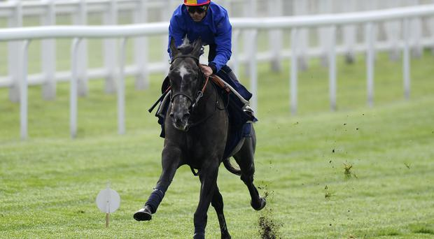 Frankie Dettori riding Amazing Maria during the 'Breakfast with the Stars' morning at Epsom racecourse. The three-year old stands out as being potentially underrated at up to 8/1 in this year's Goodwood's Nassau Stakes. Photo by Alan Crowhurst/Getty Images