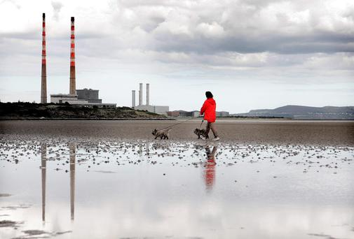 A woman walks her dogs along Sandymount beach yesterday