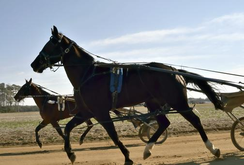 Racing French-bred trotting horses here could pave the way for the future expansion of the sport in Ireland. Photo credit: Getty Images