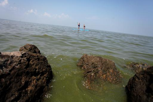 A couple paddle surfs as algae surfaces on the shore line of Maumee Bay State Park public beach along Lake Erie in Oregon, Ohio