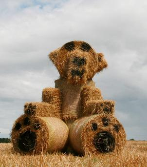 A giant teddy bear is probably the last thing motorists driving through Mountbellew in Co Galway expected to see