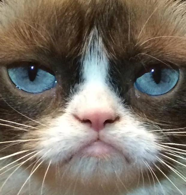 Grumpy Cat is an internet sensation