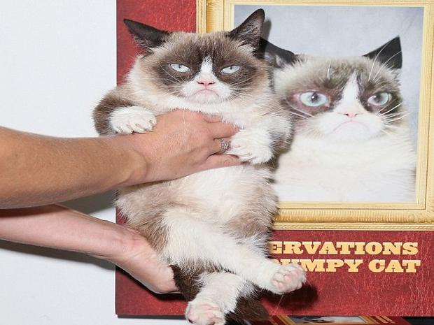 Grumpy Cat pictured at a recent book launch for his new book