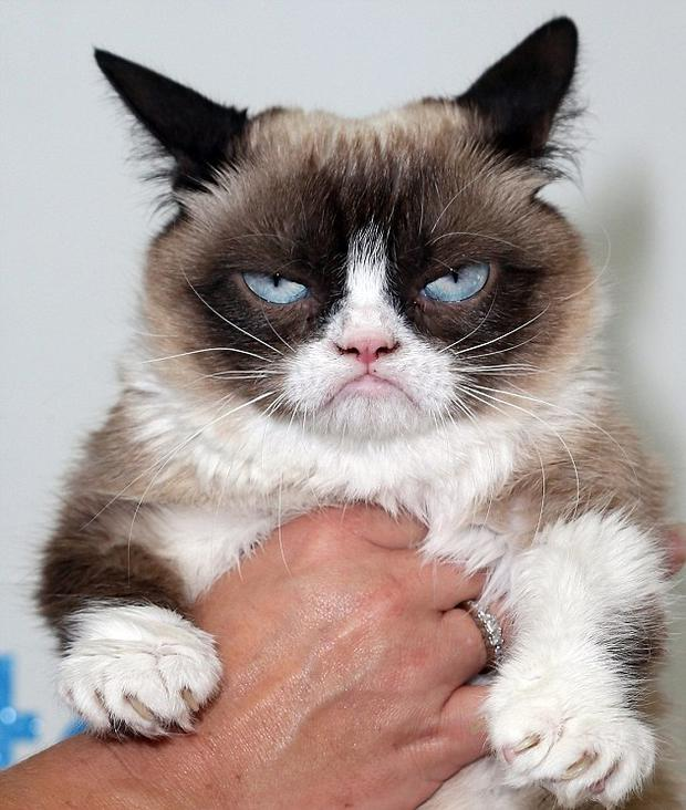 Grumpy Cat is worth €75m