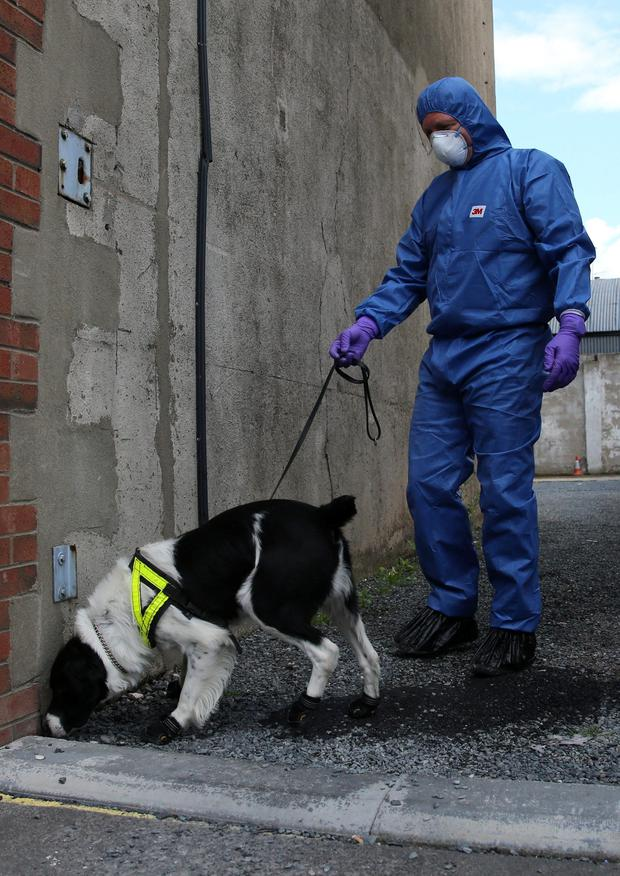 Police with victim recovery dogs in Hanover Street, Portadown as detectives investigating the disappearance and murder of the Caroline Graham 25 years ago commenced a fresh search of her former home