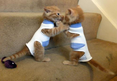 Two kittens called George and Elton have been dressed in socks to stop them suckling on each other RSPCA/PA Wire