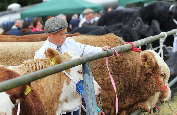 Cian Brady from Castleblaney, Co Monaghan, takes care of his stock at the Virginia Agricultural Show last week