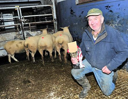 David Boal with his champion hoggets at the Raphoe mart show and sale on Monday