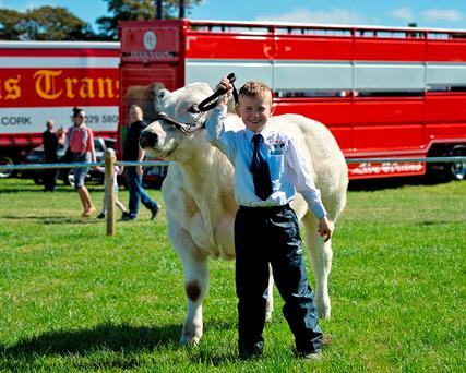 Eight year-old Ben Pearson from Ballacolla Co Laios with his Belgium Blue bull calf that was a class winner at Dualla show in Tipperary at the weekend Jennifer O'Sullivan