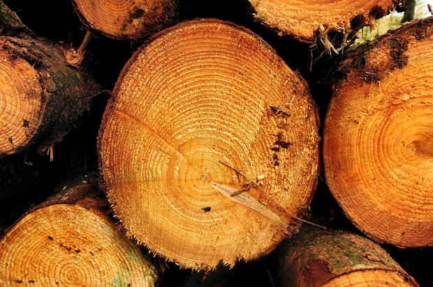 The forestry policy review identifies many new opportunities