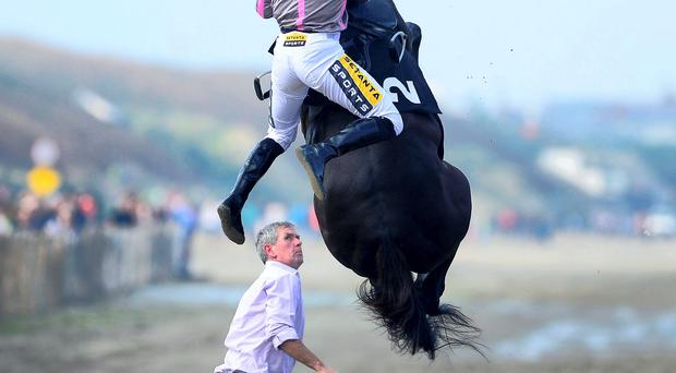 Drama going to the start as Arbritrageur flies into the air as jockey Johnny King mounts him on the course watched by groom Aidan Wall. Thankfully both horse and rider were fine and went on to finish seventh in the 4.45 at Laytown today. Photo credit: HEALY RACING.