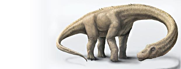 The Dreadnoughtus had a 37-foot-long neck, 30-foot tail, and weighed an estimated 65 tons