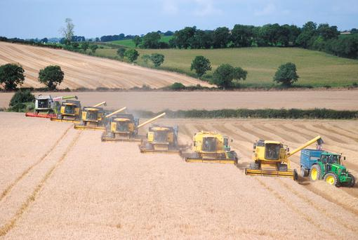 Banbridge contractor John Dan O'Hare had seven of his nine combines cutting spring barley over the weekend, with no less than 10 of his sons and daughters helping out. The scene is part of the action in CMC Country's new farm machinery DVD due out in the spring