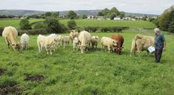 Hugh Forde is pictured with some of his stock at Cordarragh, Kiltimagh Photo: Mayo News