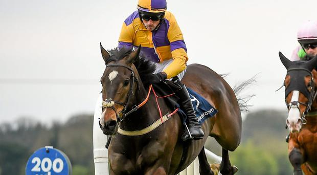 The Le Grande Chase wont be much of a contest if Darwins Fox lives up to his billing as the top contender. Ramsey Cardy / SPORTSFILE