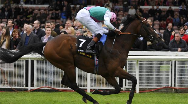 James Doyle looks for any danger after riding Kingman to win The Tattersalls Irish 2,000 Guineas at Curragh racecourse, May 2014. Photo credit: Alan Crowhurst/Getty Images