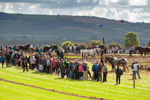 The horse ploughing was a huge attraction at the 2014 National Ploughing Championships in Ratheniska, Co. Laois. Picture: Alf Harvey/HRPhoto.ie