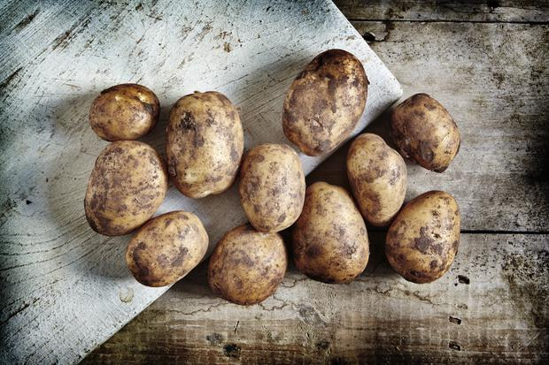 Potatoes are the most universally grown vegetable throughout the world.