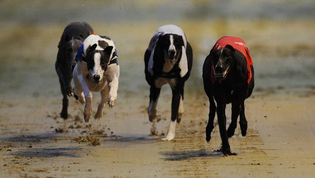 Young superstar Droopys Nidge will be hoping to relaunch a potentially great career when he contests the opening round of the Kerry Agribusiness Irish St Leger at Limerick this evening. Photo credit: Alan Crowhurst/Getty Images