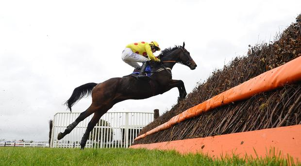 Tom Bellamy riding Hollow Penny clears the last to win The Bathwick Tyres Yeovil Handicap Steeple Chase at Wincanton. Hollow Penny has that bit more experience over fences, winning his last three completed starts. Photo credit: Alan Crowhurst/Getty Images