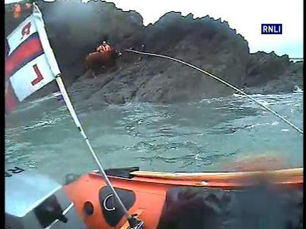 Tramore RNLI, Tramore Coast Guard and Waterford Animal Welfare rescuing a stranded bull. Photo RNLI