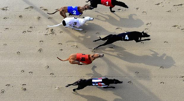 Midtown Raffa goes in the opening heat at Tralee on Friday night (Stock picture)