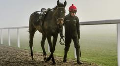 Adriana Des Mottes, seen here walking with Paul Townend at Cheltenham, looks a strong contender for victory at Limerick today. Photo: Barry Cregg / SPORTSFILE