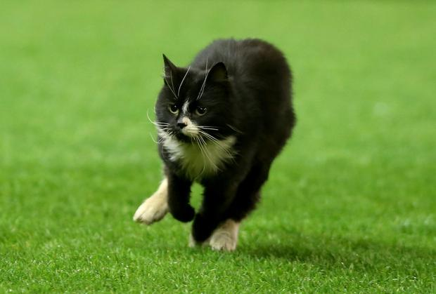 A new study suggests pet cats put owners at far greater risk of going blind