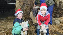 Lucy (8) and Ethan (5) Williamson with the first twin lambs of the season born on the farm of their neighbours, Eddie Storey and his son Robert, outside Dunlavin, Co Wicklow. Pic. Siobhán English.