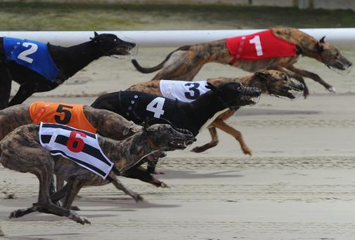 Leon Blanche of Boylesports revealed that Laughil Blake is the 12/1 favourite to become only the second greyhound ever to successfully defend the Irish Derby title
