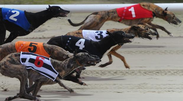 One of the most impressive performances in the trial session came from Droopys Nidge, which joined Matt Dartnall from Robert Gleeson a month back