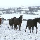 Horses in a snowy field in Brittas, Co. Dublin last month. Photo: Damien Eagers