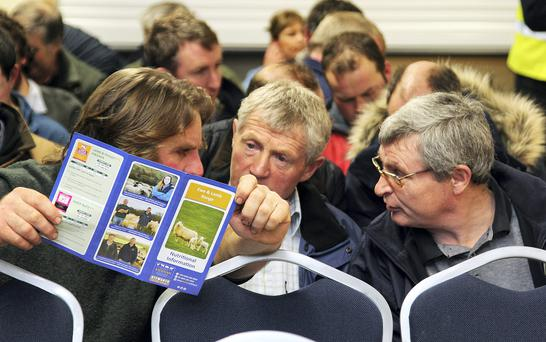 Sheep farmers chatting at the Kiernan Milling Stewarts Sheep Discussion on 'Producing Profitable Sheep' which took place at the Granard, Co Longford plant this week. Photo: Lorraine Teevan.
