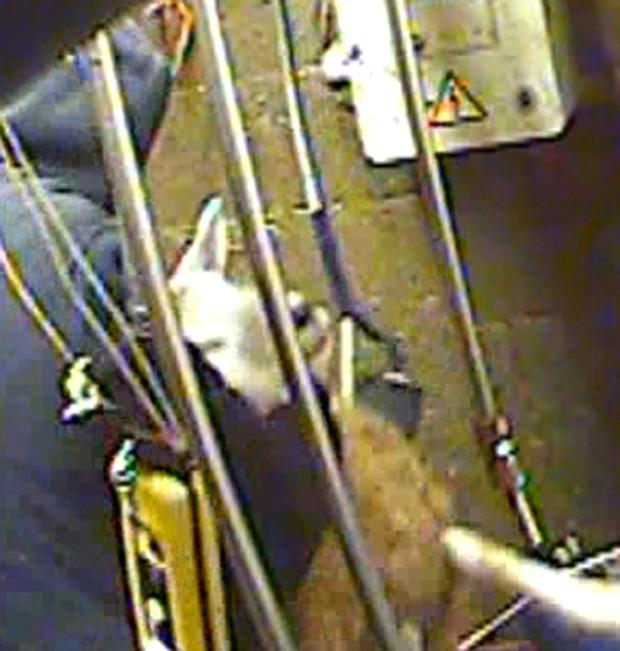 Screen grab taken from spy-cam footage of a halal slaughterhouse, where sheep have their throats cut without being stunned, which has led to action by the Food Standards Agency (FSA). Animal Aid/PA Wire