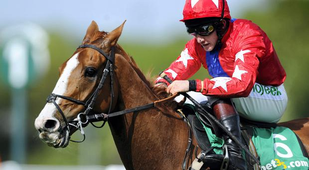 Despite his absence, Sire De Grugy has been installed at odds of just 4/6 to win Saturday's two-mile Grade Two, with Paul Nicholls' star novice Vibrato Valtat among five potential rivals.