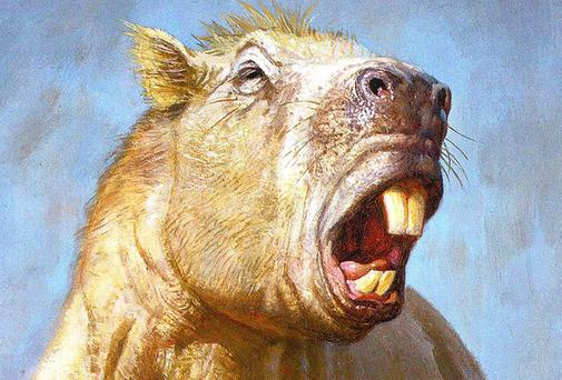 The extinct giant rodent Josephoartigasia monesi, which had a bite as powerful as that of a tiger, scientists have discovered. Photo: (University of York/PA