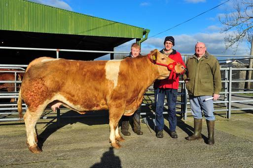 One of the top prices paid at the recent Tullow Mart sale was the €2,690 paid for this 980kg cow sold by Owen O'Neill (centre) from Corries, Co Carlow. Also pictured are Michael O'Neill (right) and Eric Driver, Tullow Mart manager. Photo: Roger Jones.