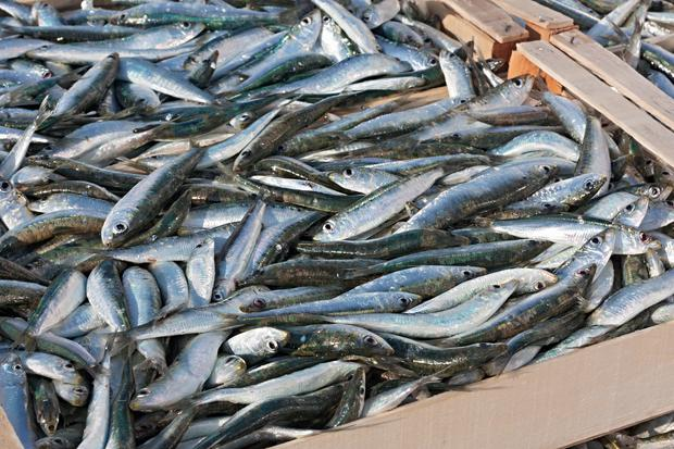 Diets high in omega-3 fatty acid foods could help fix damaged blood vessels faster.