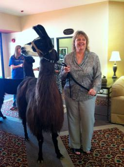 Nancy MacDonald, a business office manager, poses with a llama at GenCare SunCity at The Carillons. (AP Photo/Nancy MacDonald)