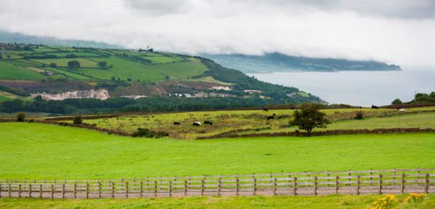 The EU's new 'active farmer' regulations could potentially force farmers dependent on conacre to the wall, estate agents in Northern Ireland have warned