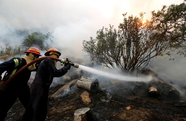 Firefighters battle to control a bushfire in Cape Town's Tokai forest REUTERS/Mike Hutchings