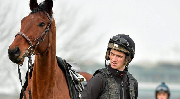 Bordini, with Patrick Mullins, on the gallops ahead of the Cheltenham Racing Festival 2015