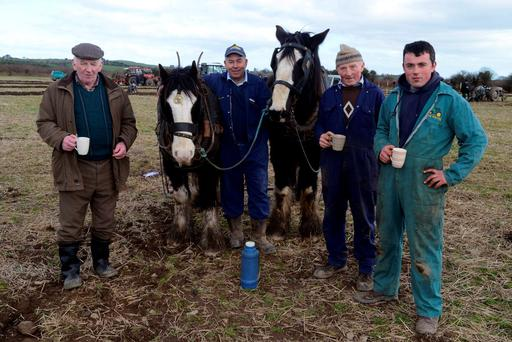 Pictured at the Cork West ploughing championship final at Kilmeen, Clonakilty on Sunday were Macroom men Paddy Sullivan, William O'Connell, JJ Delaney and Ger Delaney with horses Paddy and Toby. Picture Denis Boyle