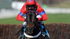 Sprinter Sacre and Barry Geraghty safely negotiate the final fence on their way to victory in the 2013 Champion Chase - fans of Nicky Henderson's charge will be hoping the horse can display the same sparkle in today's renewal. Photo: Alan Crowhurst/Getty Images