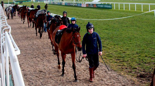 Horses from Willie Mullins stable make their way back from the Gallops