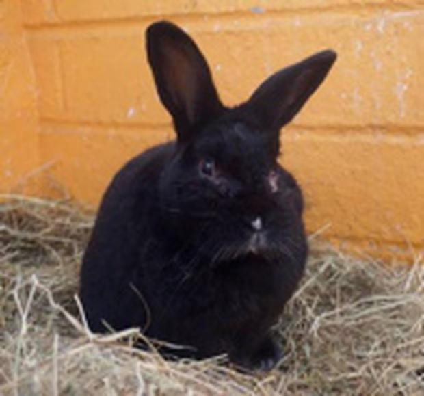 Some of the rabbits looking to be rehoused by the DSPCA