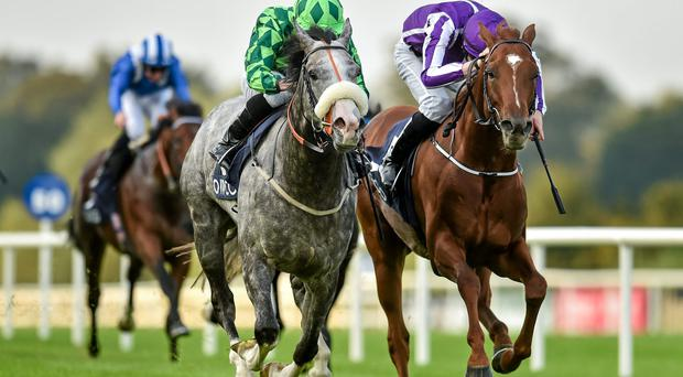 Conqueror of Aidan O'Brien's star colt Australia in the Irish Champion Stakes last September, Kevin Ryan's charge also won the French Derby in a fruitful three-year-old campaign.